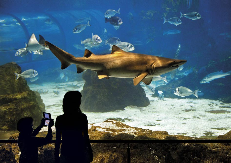 E-Billet Aquarium de Barcelone adulte